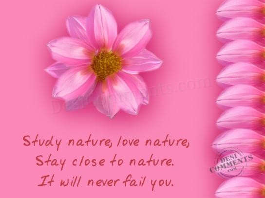 Photo Nature Love Nature