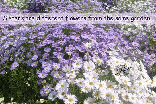 Sisters are different flowers from same garden