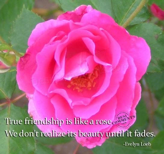 True friendship is like a rose