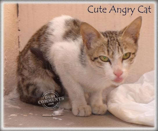 Cute Angry Cat