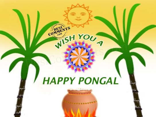 Wish you a happy pongal