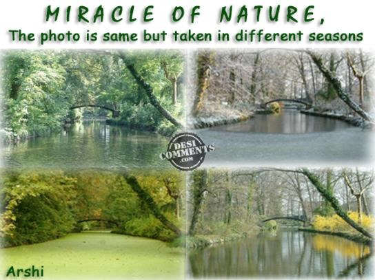 Miracle of nature