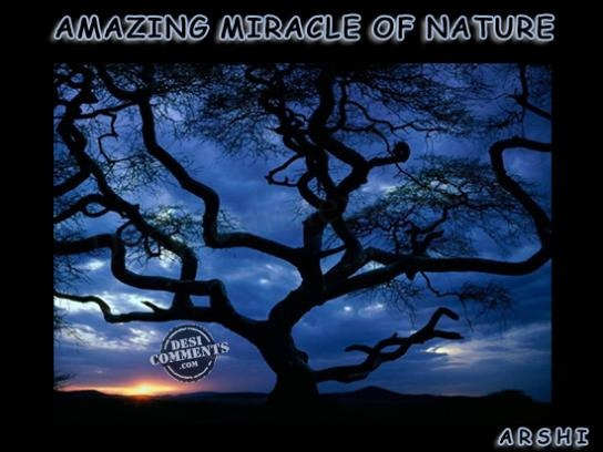 Amazing miracle of nature