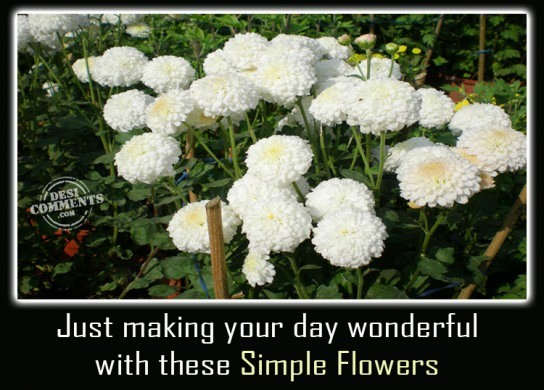 Just making your day wonderful...