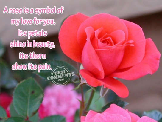 A rose is a symbol of my love for you...