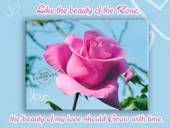 Like the beauty of the rose