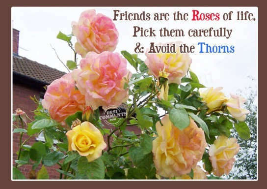 Friends are the roses of life
