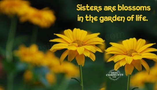 Sisters are blossoms in the garden of life