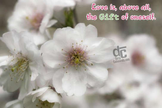 Love is above all the gift of oneself