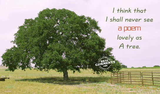 As lovely as a tree