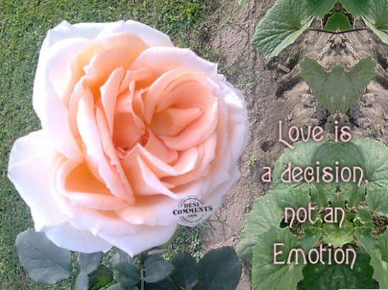 Love is a decision not an emotion