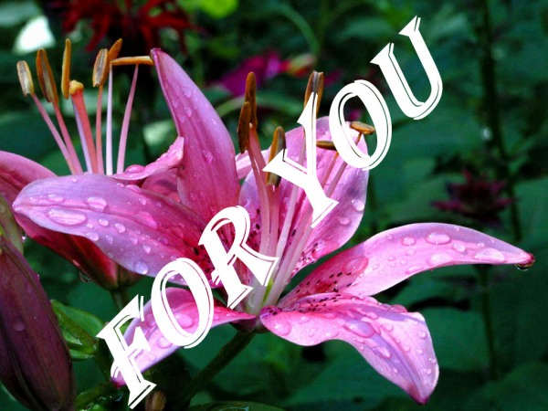 Flower for you...