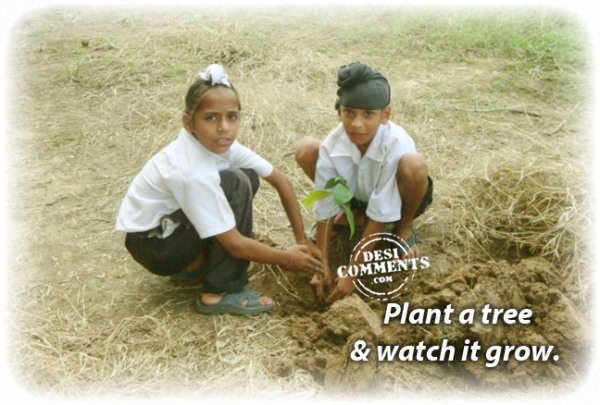 Plant a tree & watch it grow
