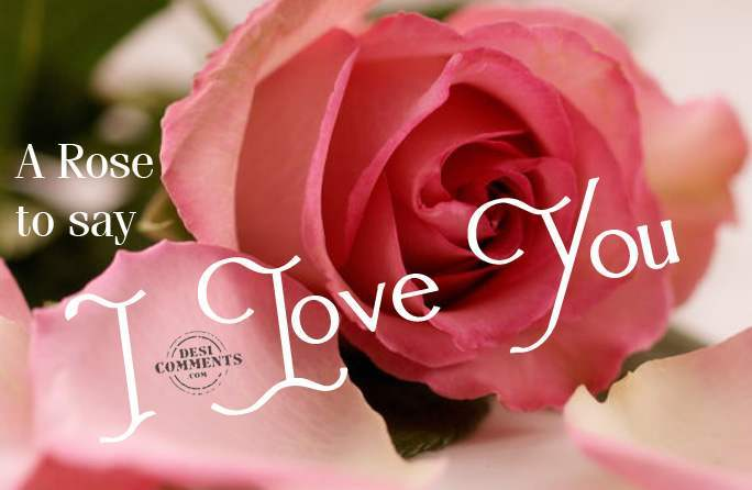 I Love You Quotes With Roses : love you roses and hearts 7 i love you candle with roses