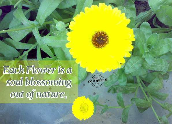 Each flower is a soul blossoming out of nature