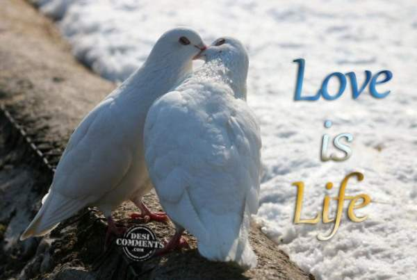 Love is Life…