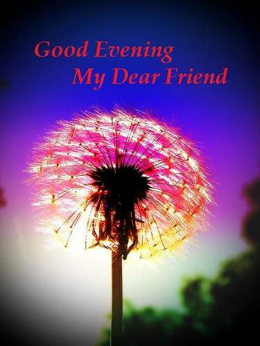 Funny Good Evening Sms #9
