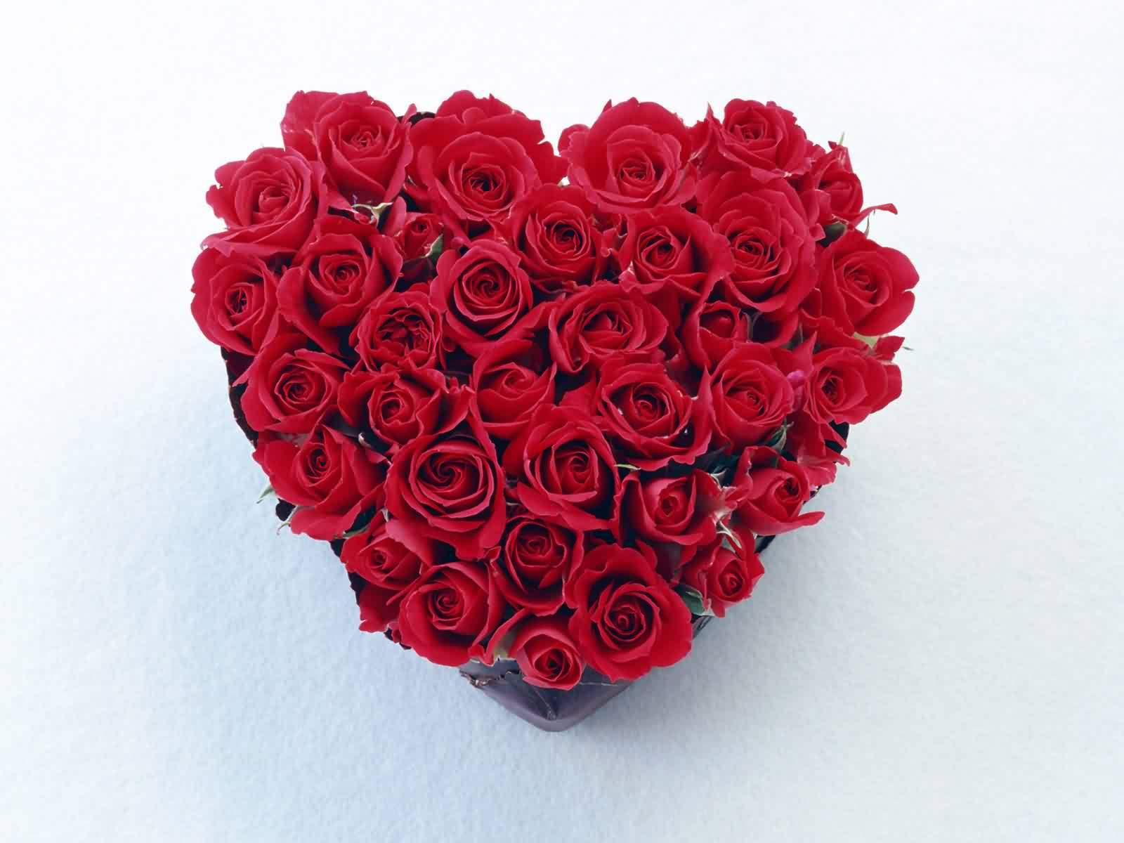 Heart made with red roses - Pics of roses and hearts ...