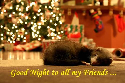 Good night to all my friends