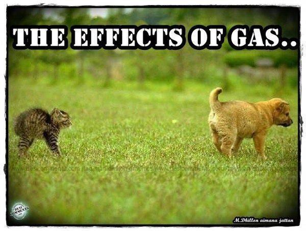 The effects of gas
