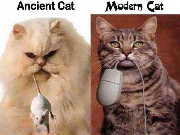 Ancient cat and modern cat