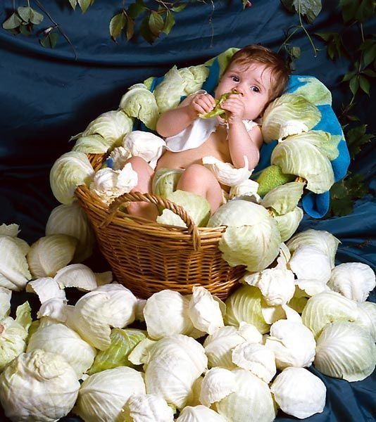 Cabbage Baby