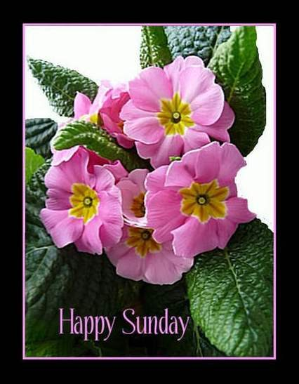 Nice and lovely sunday graphic