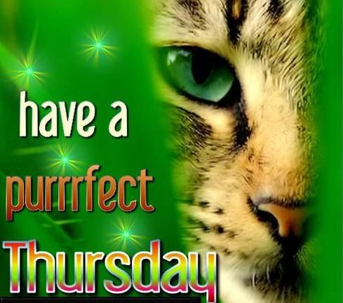 Have a puurrfect thursday!!