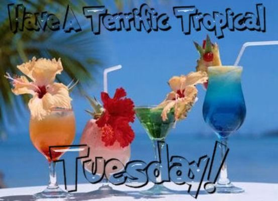 Have A Terrific Tropical Tuesday