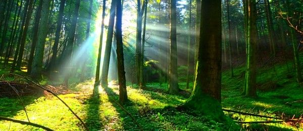 Sunlight From Trees