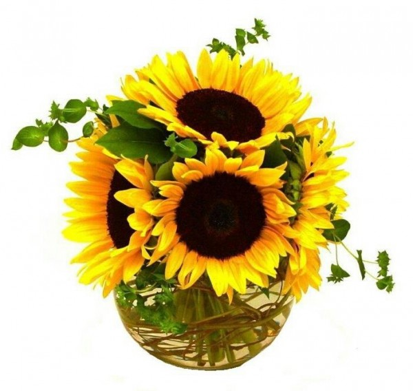 Sunflowers In Pot