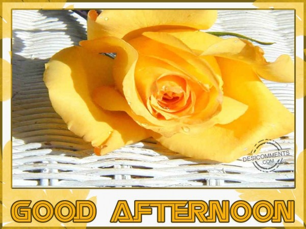 Have a Fantastic Afternoon
