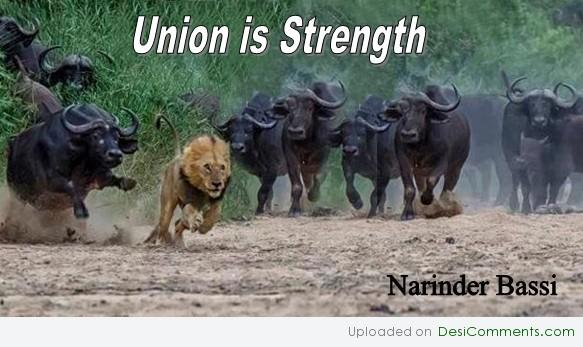 Union is Strength