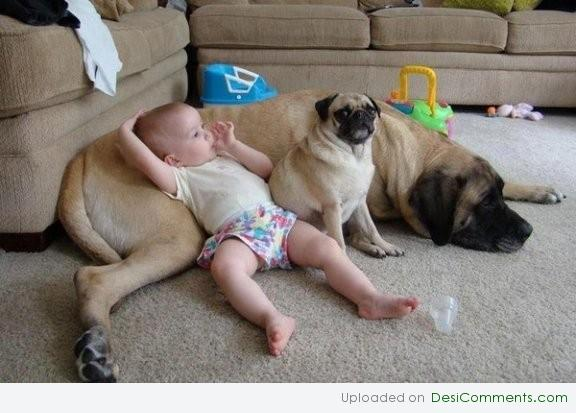 Baby-and-Funny-Dogs