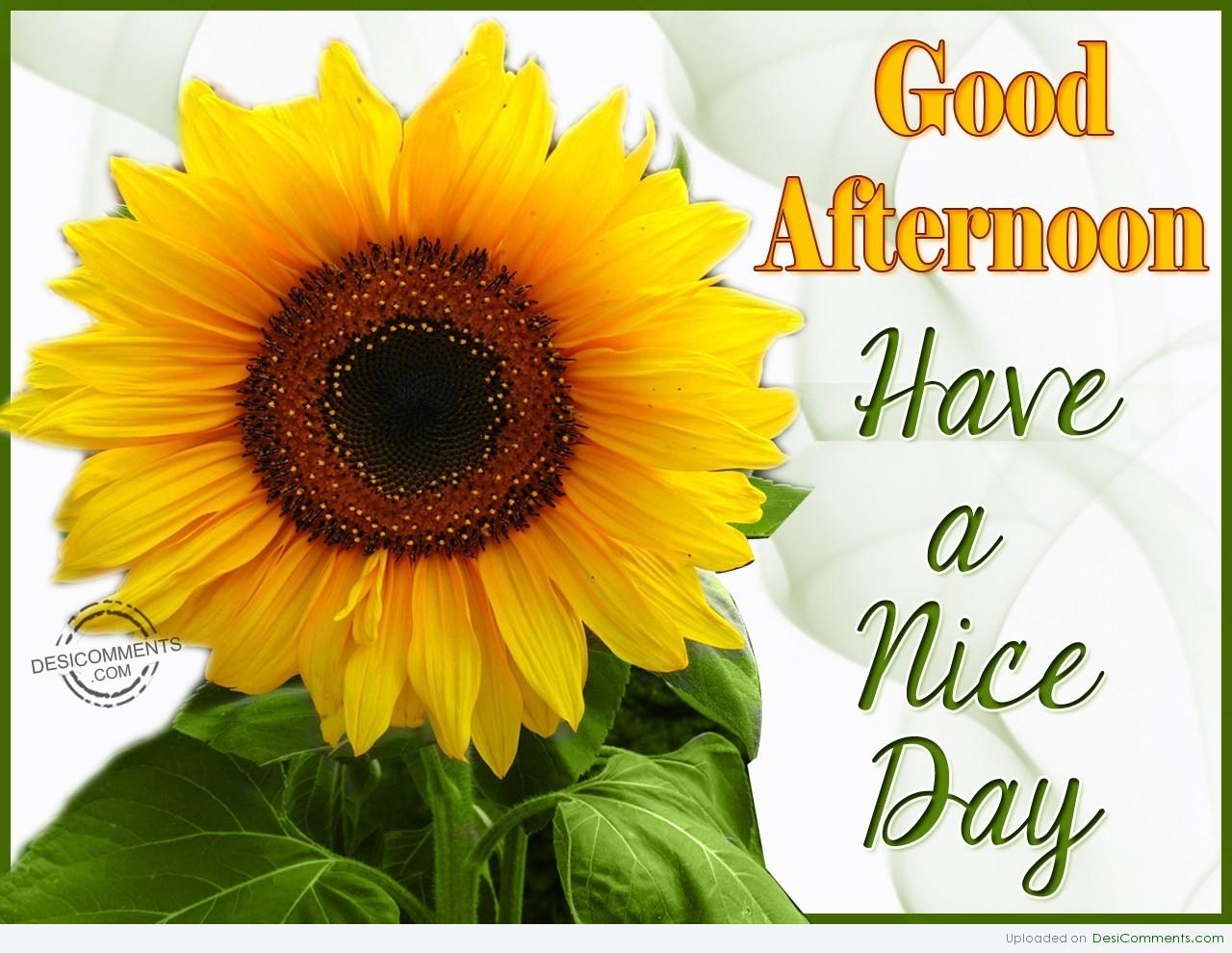 Good Afternoon Desicomments Com