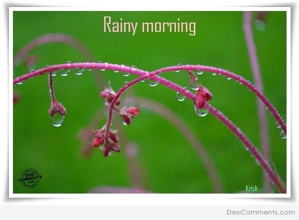 Good Morning Rainy Images: Rain Pictures, Images, Graphics For Facebook, Whatsapp