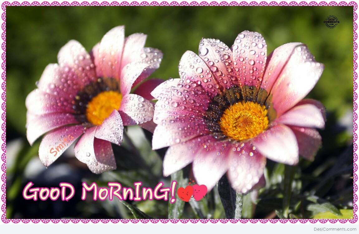 Good Morning Quotes With Flowers : Good morning flowers desicomments