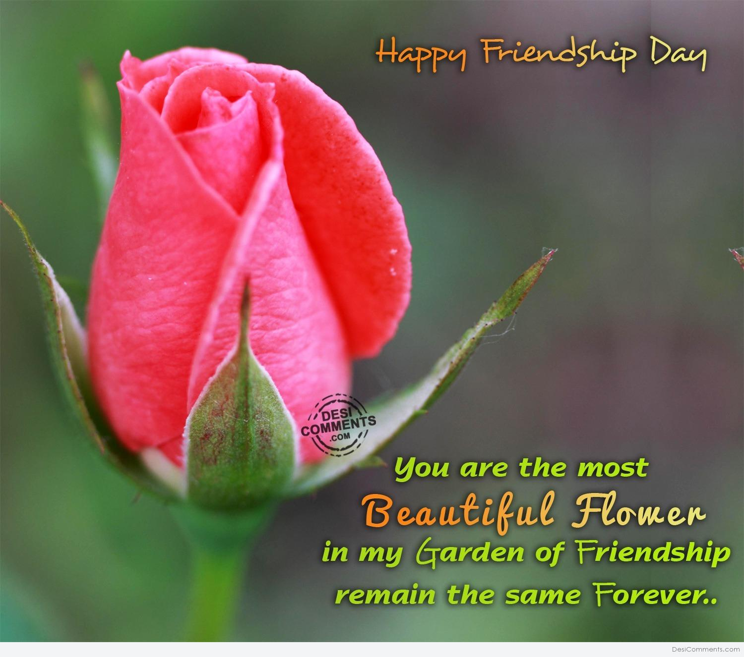 Friendship Day Pictures Images Graphics For Facebook Whatsapp