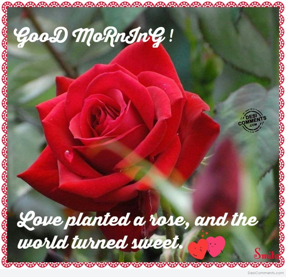Good Morning  Love planted a rose - DesiComments.com
