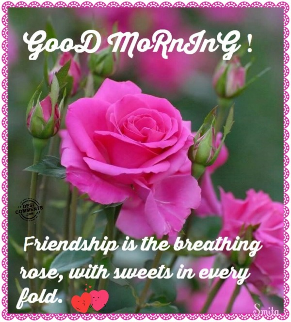 Good Morning - Friendship is the breathing rose...