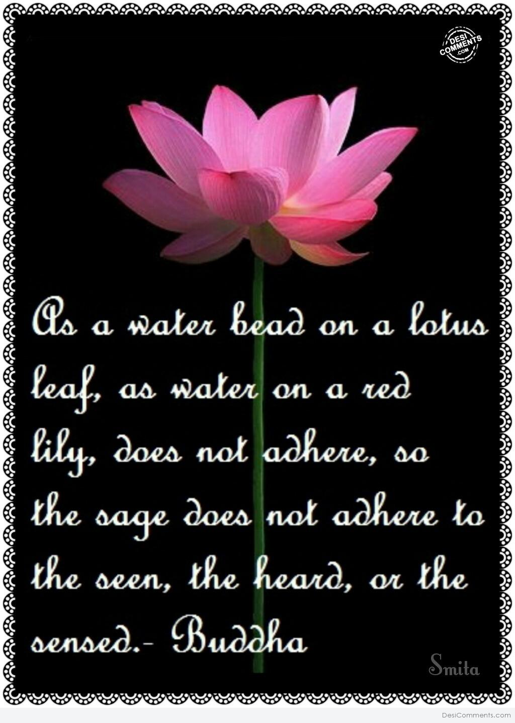 Lotus flower poems quotes images flower decoration ideas as a water bead on a lotus flower desicomments as a water bead on a lotus izmirmasajfo