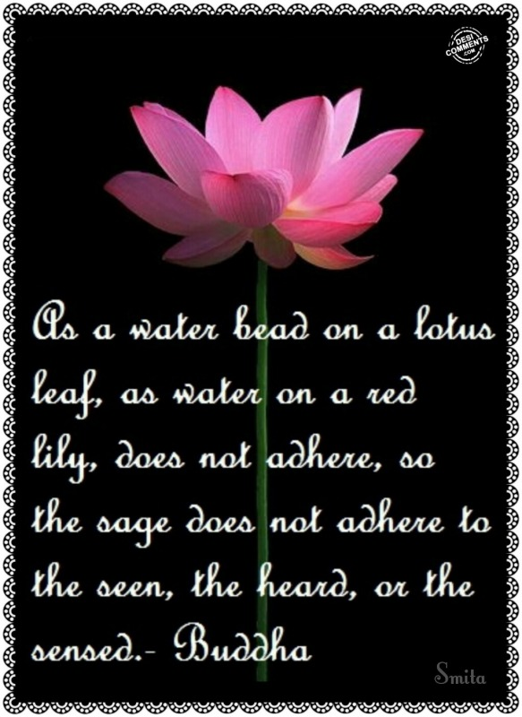 As a water bead on a lotus flower...
