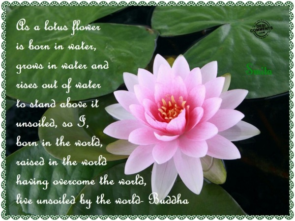 As a lotus flower is born in water...