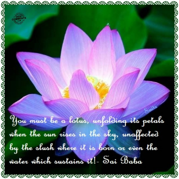 You must be a lotus, unfolding its petals...