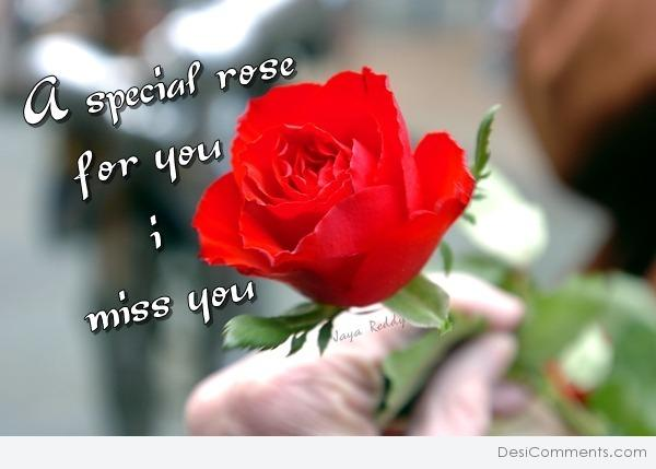 A special rose for you - I miss you