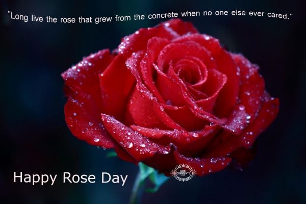 Happy Rose Day - Long live the rose that...