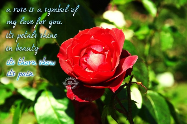 A rose is symbol of my love for you...