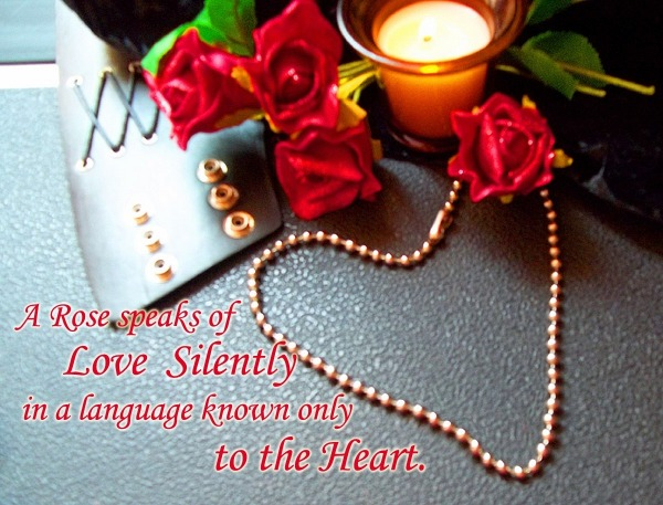 A rose speaks of love silently in a language…