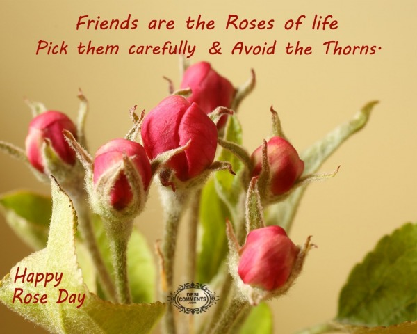 Happy Rose Day - Friends are the roses of life