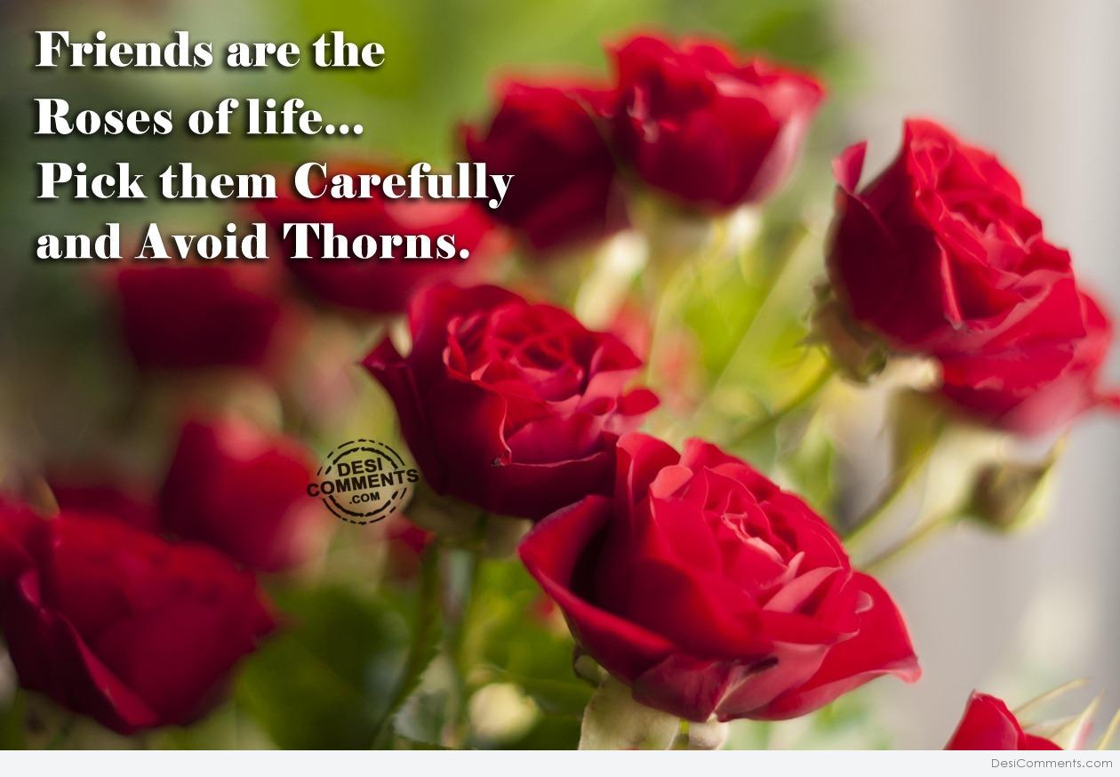 Rose Images With Love Quotes In Tamil Shareimages